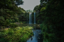 Whangerei Falls an oasis in the hot summer NZ x