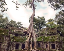 year old Ta Prohm Temple at Angkor Wat