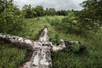 A B- Liberator that crashed on October   in Papua New Guinea reclaimed by nature The bomber plane ran low on fuel and the crew evacuated before the pilot and co-pilot landed safely in a swamp Dietmar Eckell