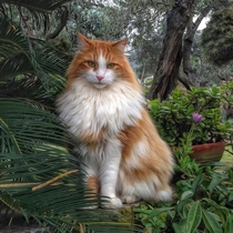 A Beautiful Fluffy Ginger Cat Taking in Some Lovely Scenery