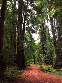 A Beautiful Trail in Muir Woods National Monument Mill Valley California