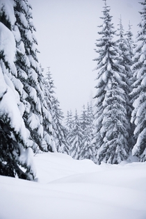 A beautiful winter scene from Snoqualmie Pass Washington