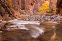 A bend in the Narrows Zion NP Utah