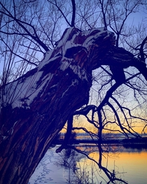 A big willow on the Mississippi River Ontario Canada  OC