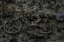 A bike that low tide left in a river in Wakayama Japan