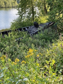 A boat being reclaimed by nature