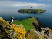 A bright-beaked puffin overlooking its haven on the Shiant Islands of Scotland Photo by Jim Richardson