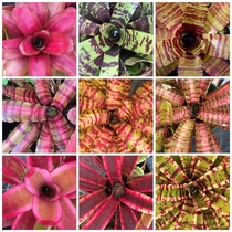 A bunch of bromeliads that Im waiting to have delivered The anticipation is killing me Lmao