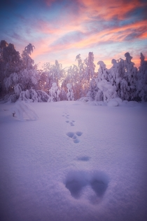 A bunny was here Sunset in rural northern Finland conjured a magical ambience
