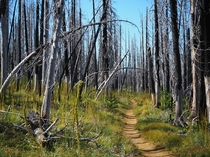 A burnt section of the Pacific Crest Trail in Oregon