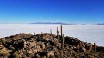 A cacti island in the middle of Salar de Uyuni