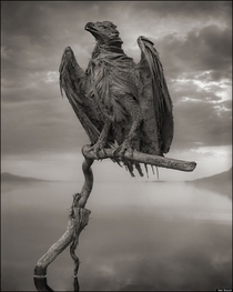 A calcified eagle at Lake Natrom in Tanzania