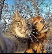 A cat taking a selfie with his female girlfriend dog Pc petslovings