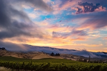 A cool bay fog tries to block out a magnificent sunset above the grapevines in Napa Valley CA