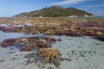A coral garden The lowest tide I have ever seen at Lizard Island on the Great Barrier Reef