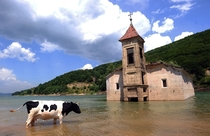 A cow walks through water in front of the submerged St Nicholas Church in Mavrovo Lake Republic of Macedonia The church was intentionally flooded in  during the creation of an artificial lake designed to supply water to a local power plant Robert Atanasov