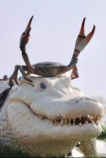 A crab riding an Albino CrocodileNatures Live Helmet
