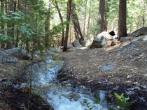 A creek flowing next to my campground in Kings Canyon California USA