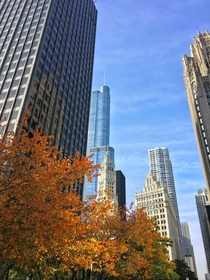 A crisp clear and vertical fall morning in Chicago