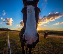 A curious Horse at Sunset
