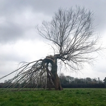 A dancing tree-god spotted on Grantchester Meadows near Cambridge UK