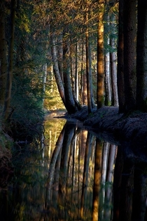 A dark forest in Bavaria Germany