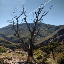 A dead tree and a beautiful view Tonto National Forest AZ