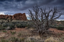 A dead tree and stormy skies in Arches National Park UT