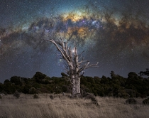 A dead Ttara tree under the galactic core Banks Peninsula Canterbury New Zealand