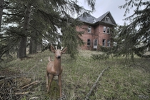 A Deer Captured Out Front of a Massive amp Very Dangerous Abandoned Ontario House