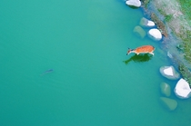 A deer in the water photographed by Jeongwon Park