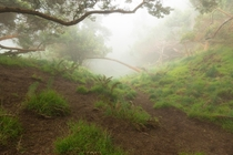 A disc golf course up in the clouds of Maui