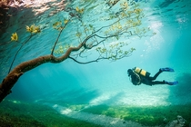 A Diver in Green Lake Grner See Austria