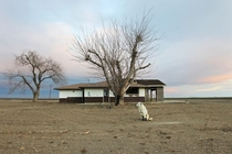 A dog hangs around an abandoned home amid a parched field in drought-ridden Bakersfield CA  By David McGnew