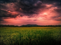 A dramatic sunset over our paddy field