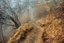A dreary fog on the Appalachian Trail - inside of the Smoky Mountains Tennessee