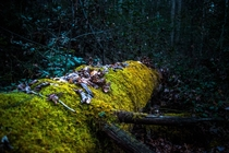 A fallen tree claimed by moss