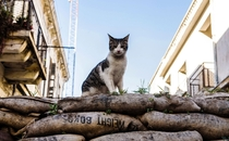 A feral cat on a sandbag barricade in the UN-controlled buffer zone separating the divided city of Nicosia Cyprus February    Photo by Iakovos Hatzistavrou