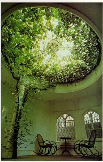 A Ficus tree makes a breathtaking display of aerial greenery filling the glass dome of what was once a chapel Tradition has it that the dome was built round the tree