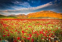 A Field of Poppies in Castelluccio di Norcia Umbria Italy  by Stefano Termanini