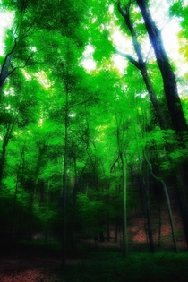 A fogged camera lens helped to create this trippy forest scene in Saugatuck MI