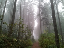 A foggy day along a forest road Nanaimo BC