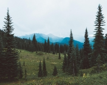 A foggy day at Mount Rainier National Park WA