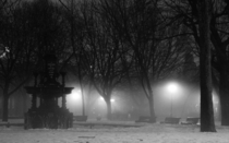 A Foggy Evening in ST Henri Park Montreal QC