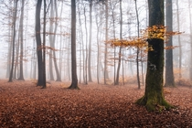 A foggy forest near my house This represents so good the autumn vibes Fribourg Switzerland  IG  daviddunand_photography