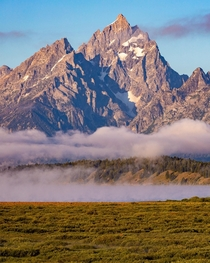 A foggy morning - Grand Teton National Park  IG - travlonghorns