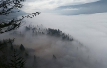 A foggy morning on the pacific northwest gorge Just up the road from Stevenson Washington