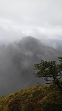 A foggy view from the top of Saddle Mountain in the Oregon Coast Range