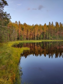 A forest in the evening sun You seemed to enjoy my yesterdays post heres another view from the same place  Jmsnkoski Finland