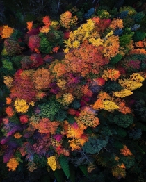 A forest of colour at Mount Wilson Australia captured by Jay Daley